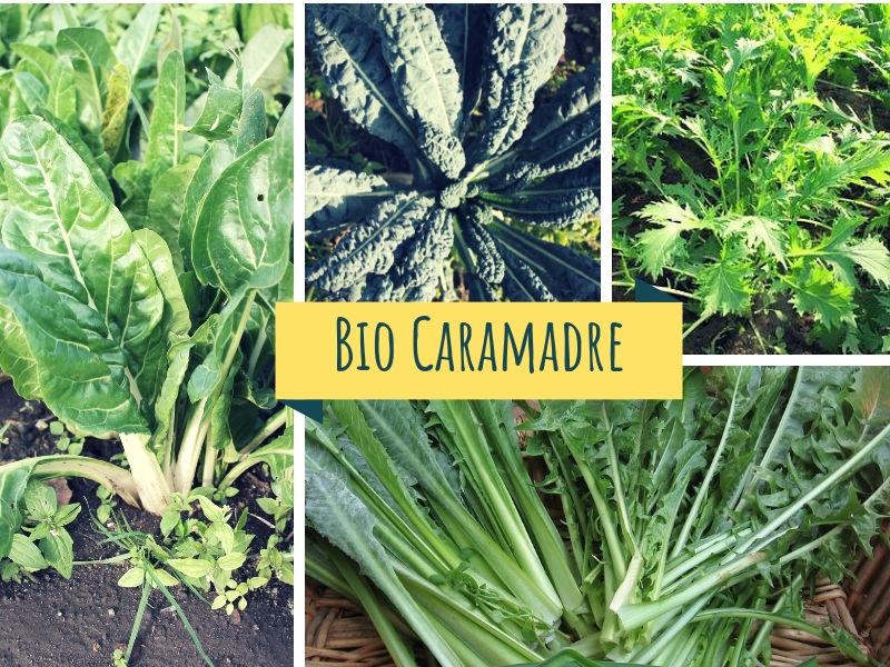 Verdura a foglia BIO (Cicoria / Broccoletti / Broccoletto Mizuma / Cavolo Nero / Bieta)