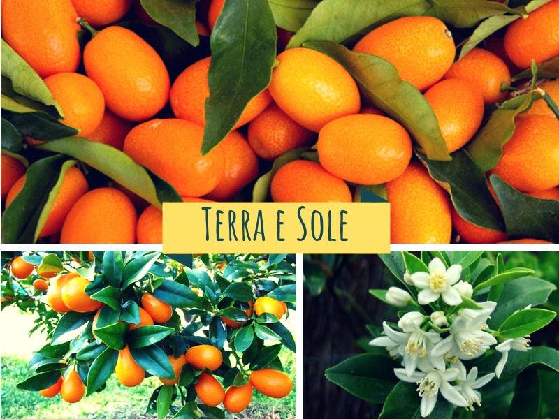 Kumquat Bio ( Mandarino cinese)