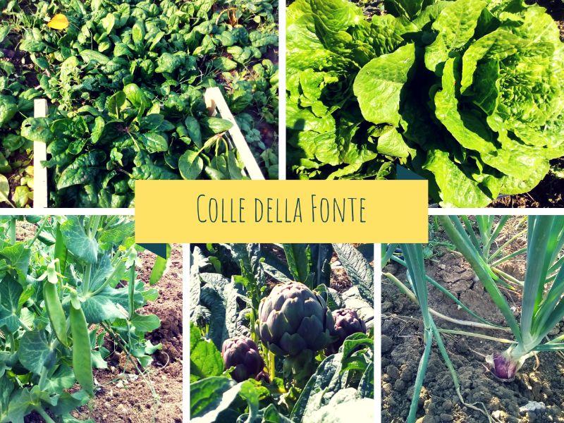 Verdure primaverilli