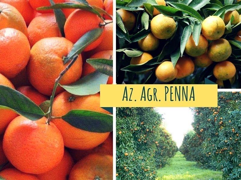 Clementine Comune Bio