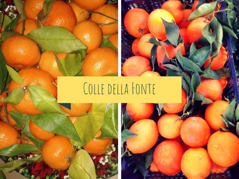 Duo di arance e mandarini